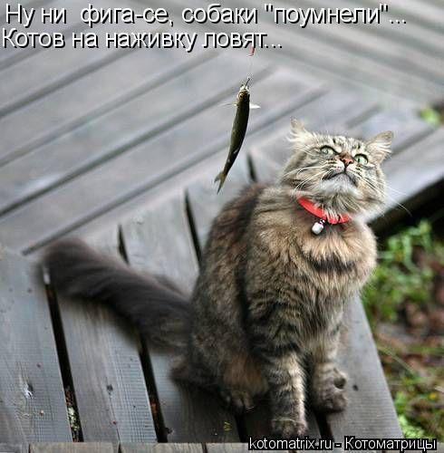 """Котоматрица: Ну ни  фига-се, собаки """"поумнели""""...  Котов на наживку ловят..."""