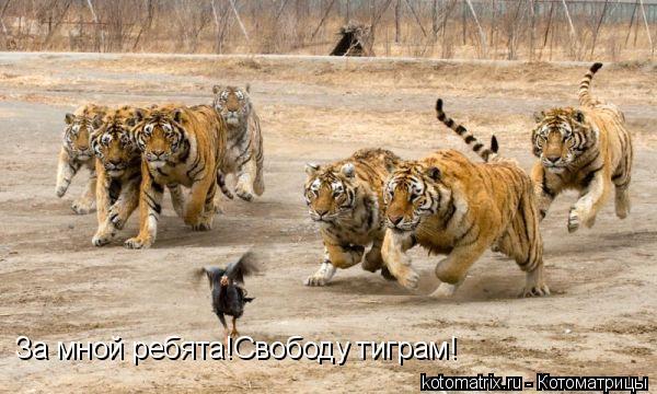 Котоматрица: За мной ребята!Свободу тиграм!