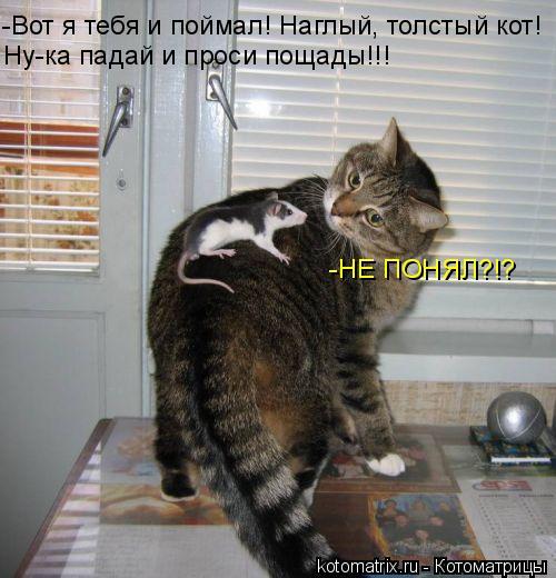 Котоматрица: -Вот я тебя и поймал! Наглый, толстый кот! Ну-ка падай и проси пощады!!! -НЕ ПОНЯЛ?!?