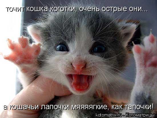 Котоматрица: точит кошка коготки, очень острые они... а кошачьи лапочки мяяяягкие, как тапочки!
