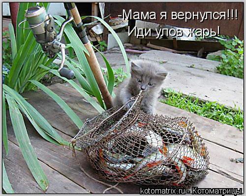 Котоматрица: -Мама я вернулся!!! Иди улов жарь!