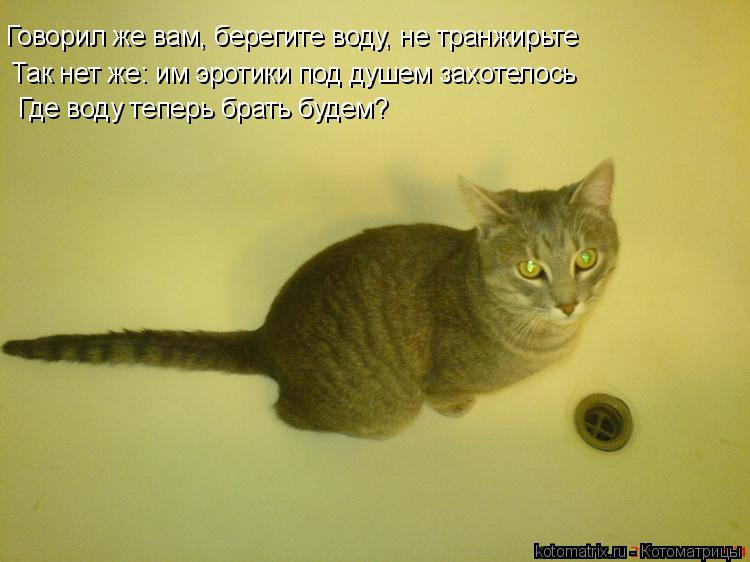 Котоматрица: Говорил же вам, берегите воду, не транжирьте Так нет же: им эротики под душем захотелось Где воду теперь брать будем?