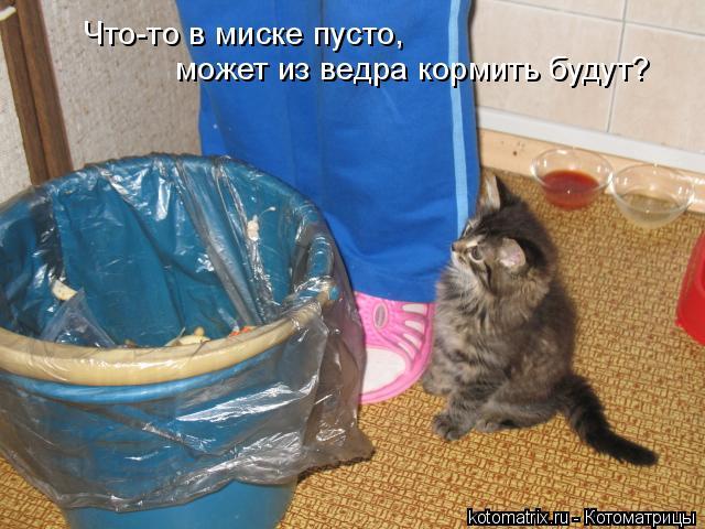 Котоматрица: Что-то в миске пусто, может из ведра кормить будут?