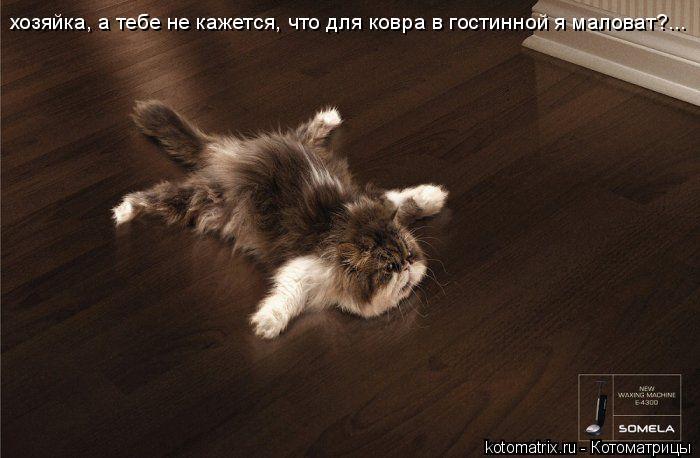 Котоматрица: хозяйка, а тебе не кажется, что для ковра в гостинной я маловат?...