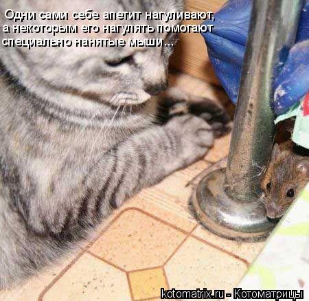 Котоматрица: Одни сами себе апетит нагуливают, а некоторым его нагулять помогают  специально нанятые мыши...