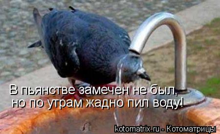 Котоматрица: В пьянстве замечен не был, но по утрам жадно пил воду!