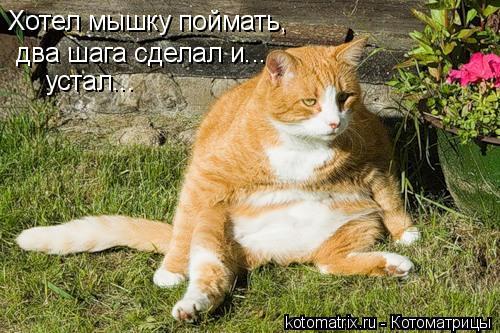 Котоматрица: Хотел мышку поймать,  два шага сделал и... устал...