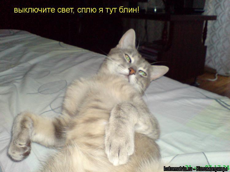 Котоматрица: выключите свет, сплю я тут блин!