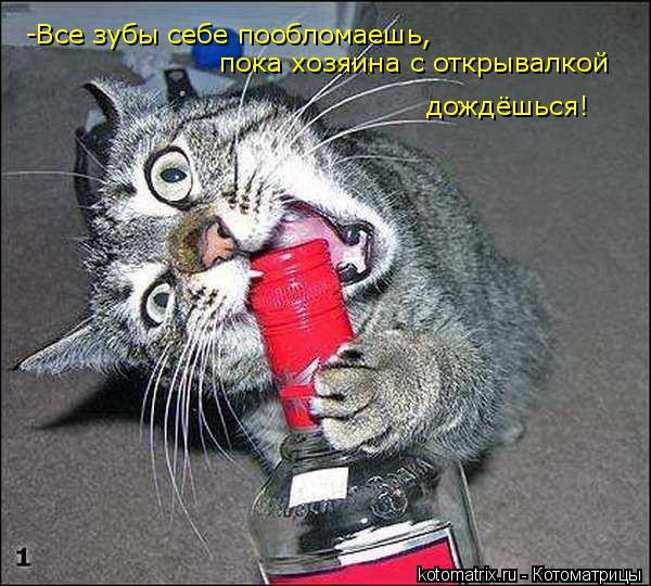 Котоматрица: -Все зубы себе пообломаешь, пока хозяина с открывалкой дождёшься!