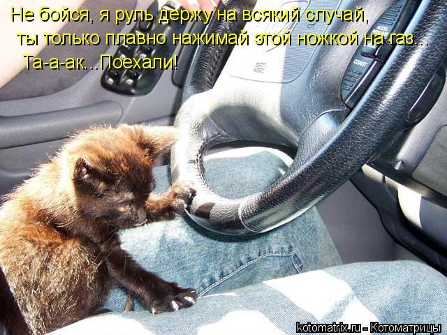 Котоматрица: Не бойся, я руль держу на всякий случай, ты только плавно нажимай этой ножкой на газ... Та-а-ак...Поехали!