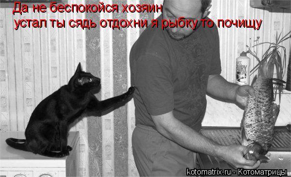 Котоматрица: Да не беспокойся хозяин устал ты сядь отдохни я рыбку то почищу