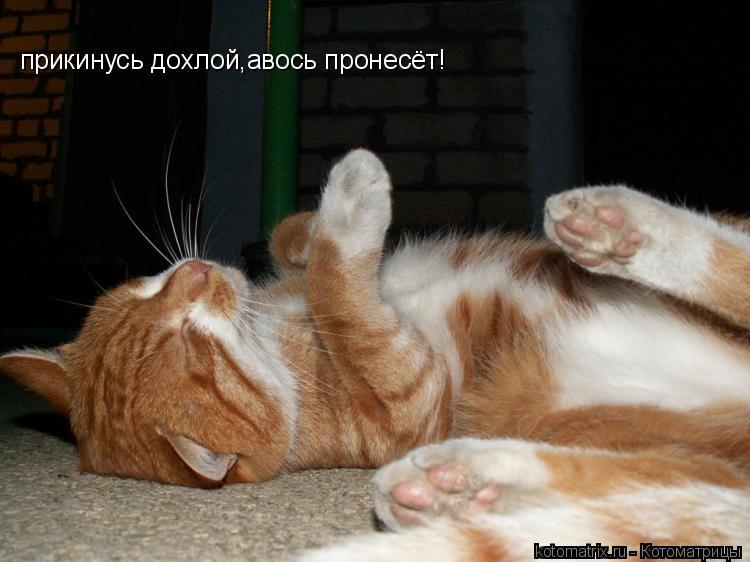 Котоматрица: прикинусь дохлой,авось пронесёт!