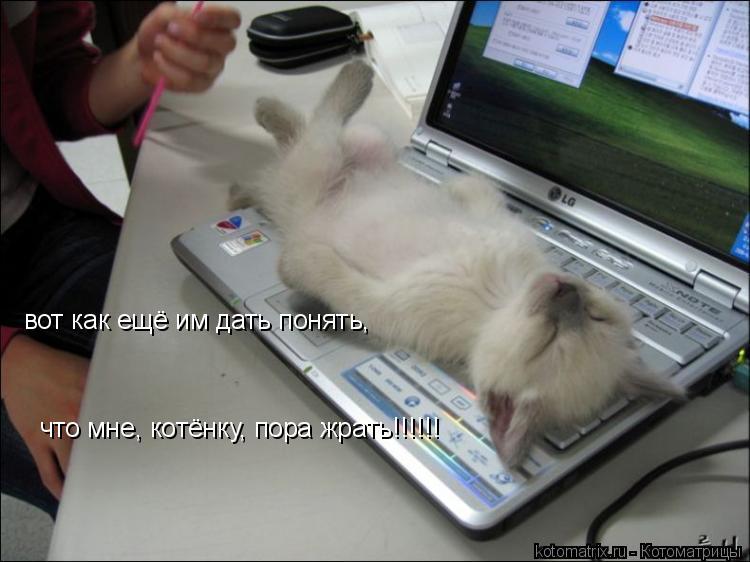 Котоматрица: вот как ещё им дать понять, что мне, котёнку, пора жрать!!!!!!