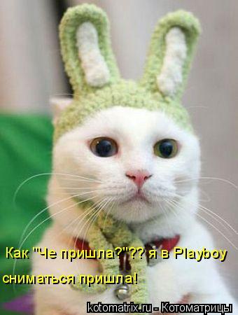 """Котоматрица: Как """"Че пришла?""""?? я в Playboy сниматься пришла!"""