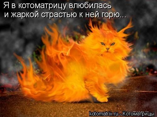 Котоматрица: Я в котоматрицу влюбилась и жаркой страстью к ней горю...