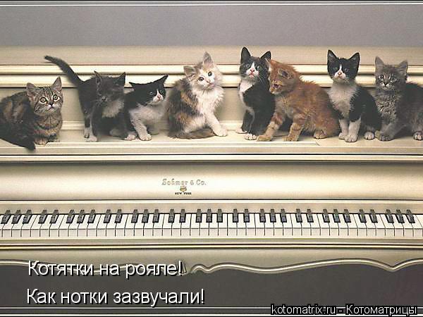 Котоматрица: Котятки на рояле! Как нотки зазвучали!