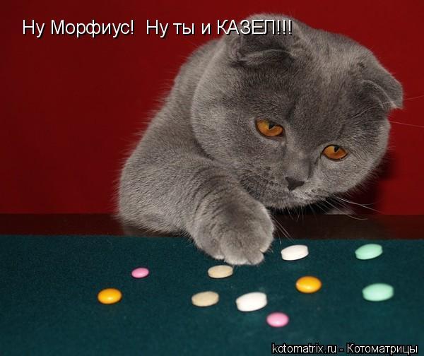Котоматрица: Ну Морфиус!  Ну ты и КАЗЕЛ!!!