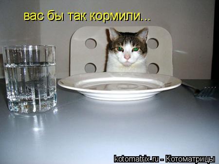 Котоматрица: вас бы так кормили...