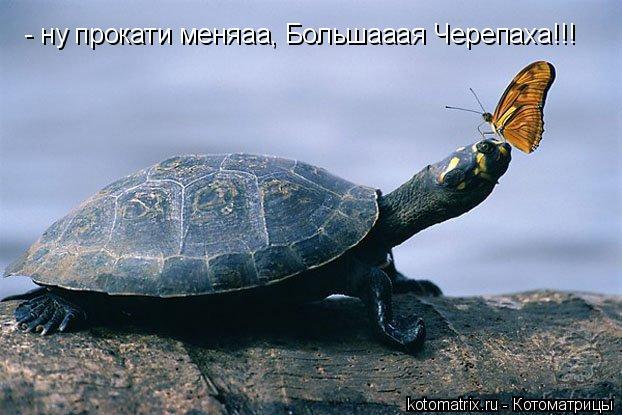 Котоматрица: - ну прокати меняаа, Большааая Черепаха!!!