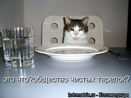 Котоматрица: это что?общество чистых тарелок?