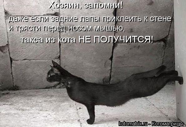 Котоматрица: Хозяин, запомни!  даже если задние лапы приклеить к стене и трясти перед носом мышью, такса из кота НЕ ПОЛУЧИТСЯ!