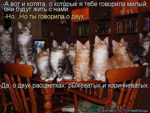 Котоматрица: -А вот и котята, о которых я тебе говорила милый, они будут жить с нами. -Но...Но ты говорила о двух.... -Да, о двух расцветках: рыжеватых и коричне