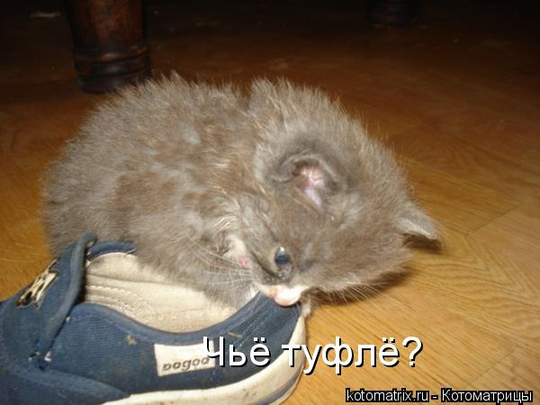 Котоматрица: Чьё туфлё?