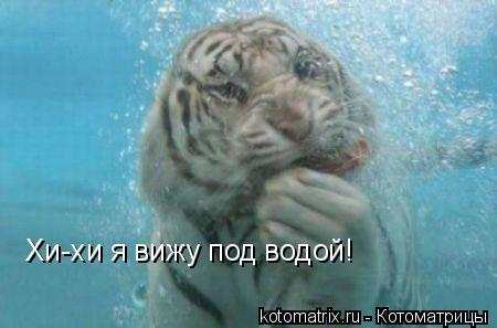 Котоматрица: Хи-хи я вижу под водой!