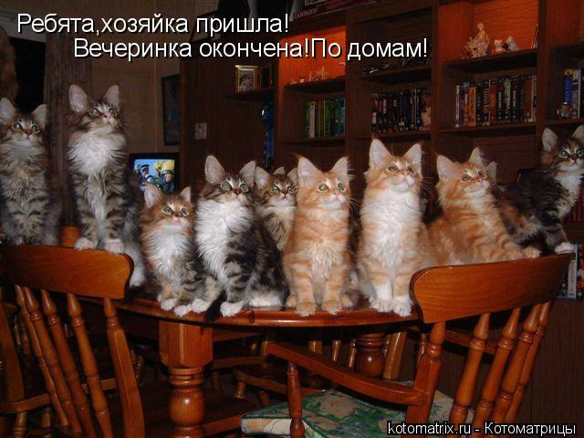 Котоматрица: Ребята,хозяйка пришла! Вечеринка окончена!По домам!