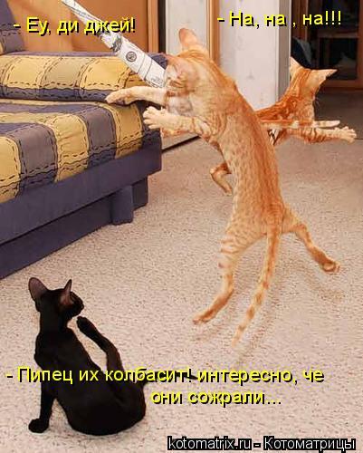 Котоматрица: - Еу, ди джей! - На, на , на!!! - Пипец их колбасит! интересно, че  они сожрали...