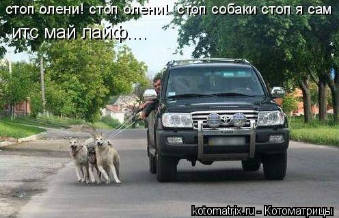 Котоматрица: стоп олени! стоп олени!  стоп собаки стоп я сам итс май лайф....