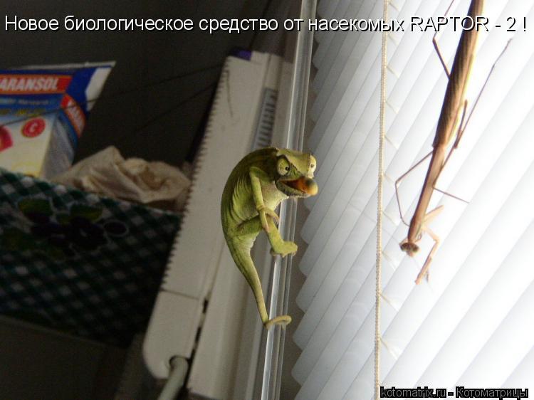 Котоматрица: Новое биологическое средство от насекомых RAPTOR - 2 !