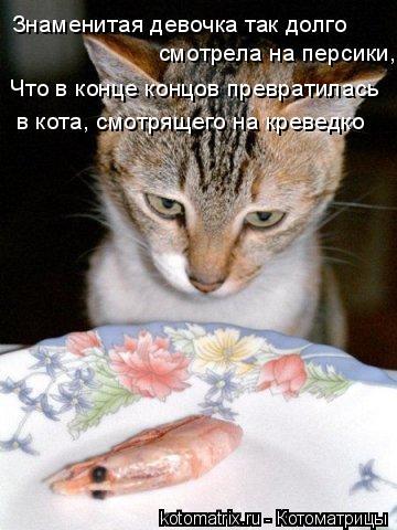 Котоматрица: Знаменитая девочка так долго  смотрела на персики,  Что в конце концов превратилась  в кота, смотрящего на креведко