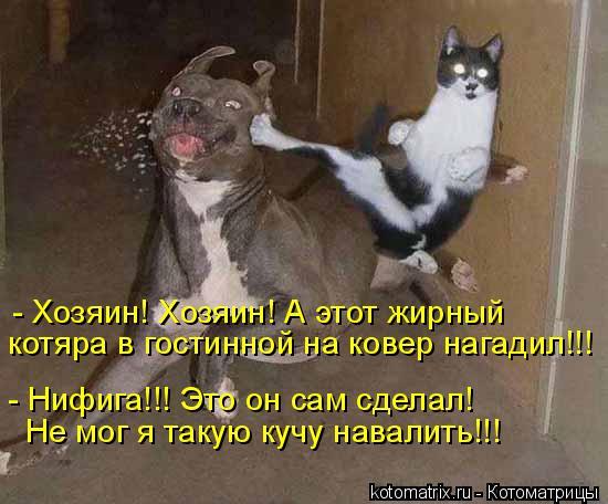 Котоматрица: - Хозяин! Хозяин! А этот жирный  котяра в гостинной на ковер нагадил!!! - Нифига!!! Это он сам сделал!  Не мог я такую кучу навалить!!!