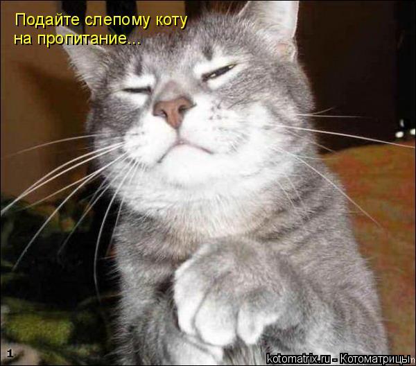 Котоматрица: Подайте слепому коту на пропитание...