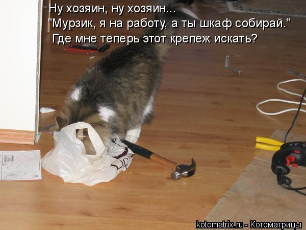 """Котоматрица: Ну хозяин, ну хозяин...  """"Мурзик, я на работу, а ты шкаф собирай."""" Где мне теперь этот крепеж искать?"""