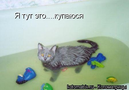 Котоматрица: Я тут это....купаюся