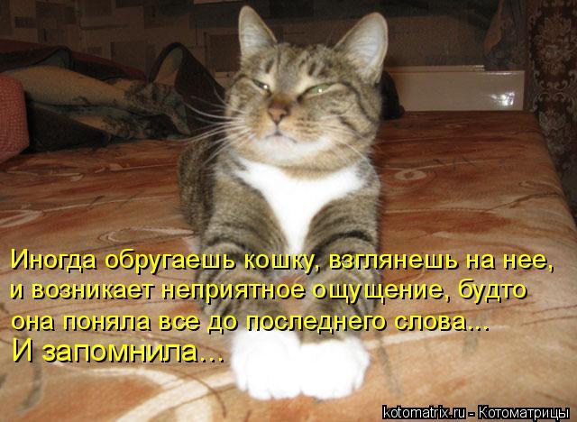 Котоматрица: Иногда обругаешь кошку, взглянешь на нее, и возникает неприятное ощущение, будто  она поняла все до последнего слова... И запомнила...