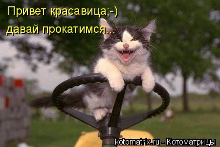 Котоматрица: Привет красавица;-) давай прокатимся...