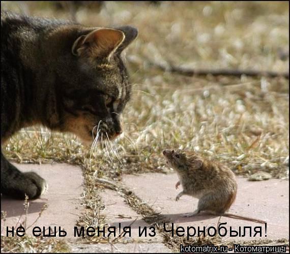Котоматрица: не ешь меня!я из Чернобыля!