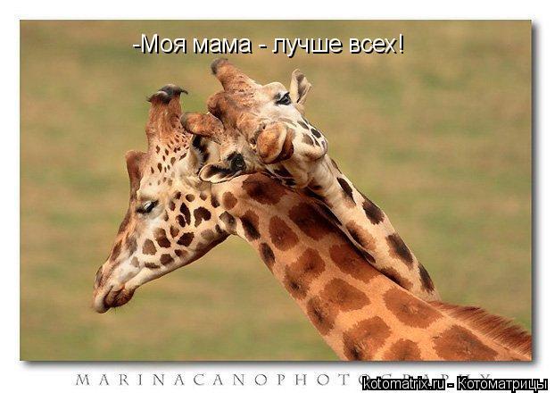 Котоматрица: -Моя мама - лучше всех!