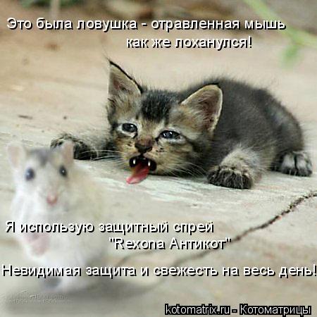 """Котоматрица: Это была ловушка - отравленная мышь как же лоханулся! Я использую защитный спрей  """"Rexona Антикот"""" Невидимая защита и свежесть на весь день!"""