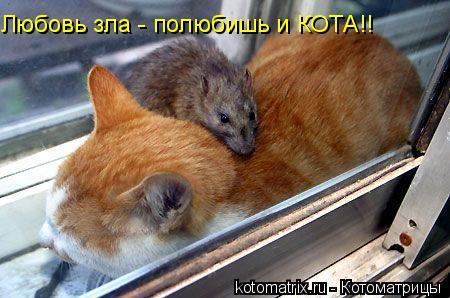 Котоматрица: Любовь зла - полюбишь и КОТА!!