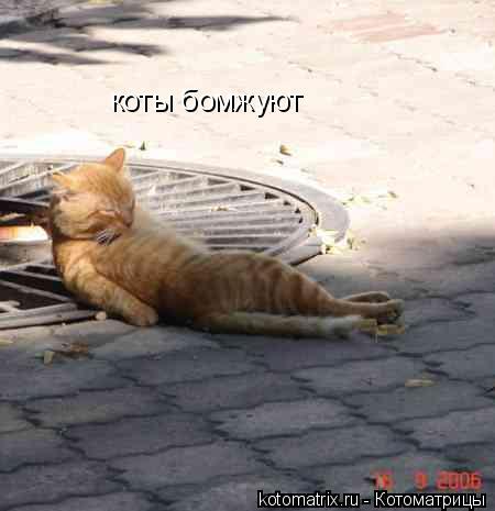 Котоматрица: коты бомжуют