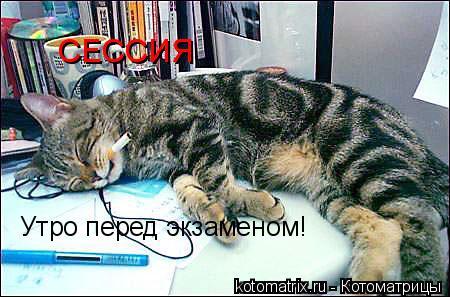 Котоматрица: СЕССИЯ Утро перед экзаменом!