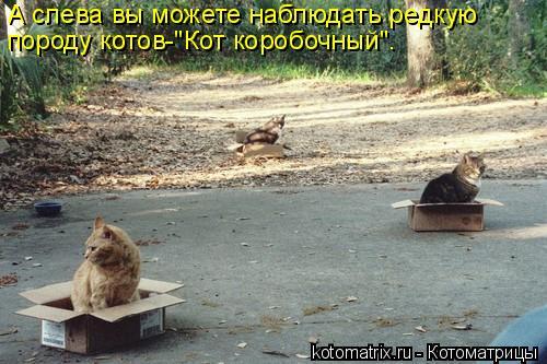 """Котоматрица: А слева вы можете наблюдать редкую  породу котов-""""Кот коробочный""""."""