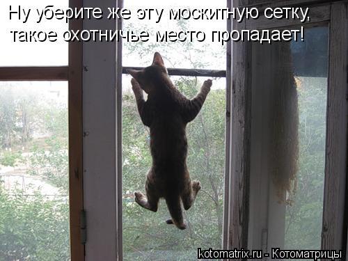 Котоматрица: Ну уберите же эту москитную сетку, такое охотничье место пропадает!