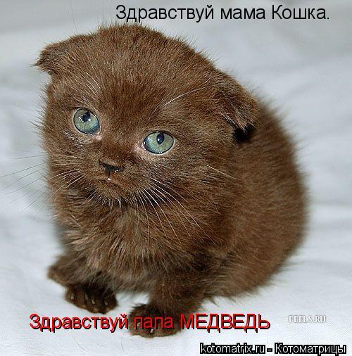 Котоматрица: Здравствуй мама Кошка. Здравствуй папа МЕДВЕДЬ