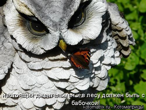 Котоматрица: настоящий джентельмен и в лесу должен быть с бабочкой!  бабочкой!