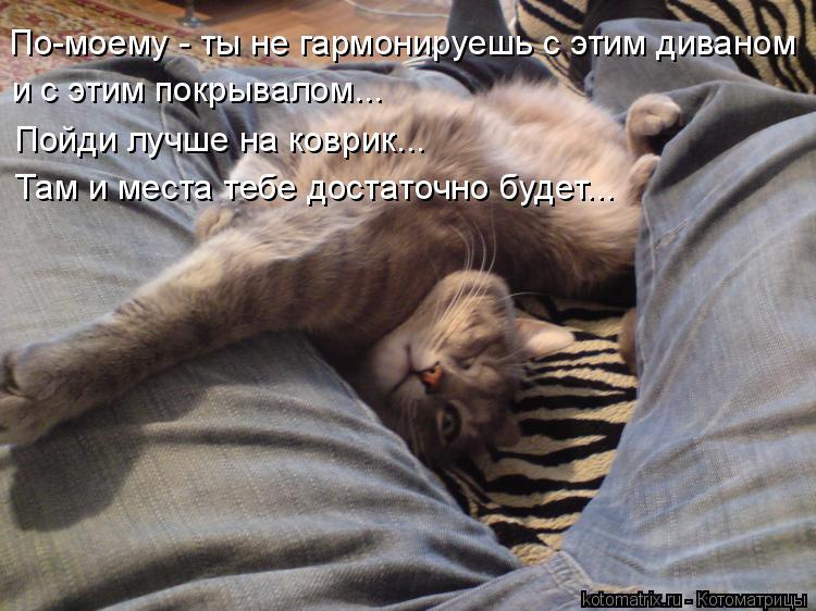 Котоматрица: По-моему - ты не гармонируешь с этим диваном и с этим покрывалом... Пойди лучше на коврик... Там и места тебе достаточно будет...